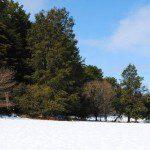 slide-6-snow-field