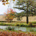 slide-8-autumn